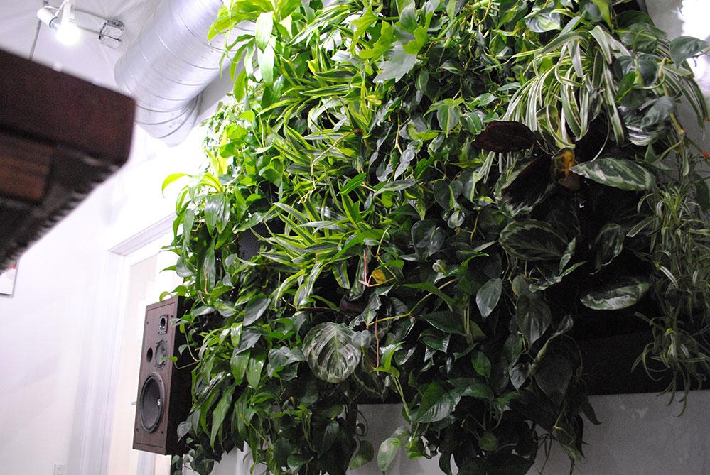 Plants growing at the Sacramento Brew Bike Bar